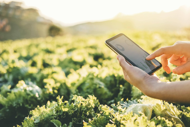 software para agronegócio é tendência em ascensão